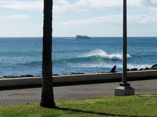 ハワイ ワイキキ ビーチ カカアコ ウォーターフロント パーク Kakaako Waterfront Park