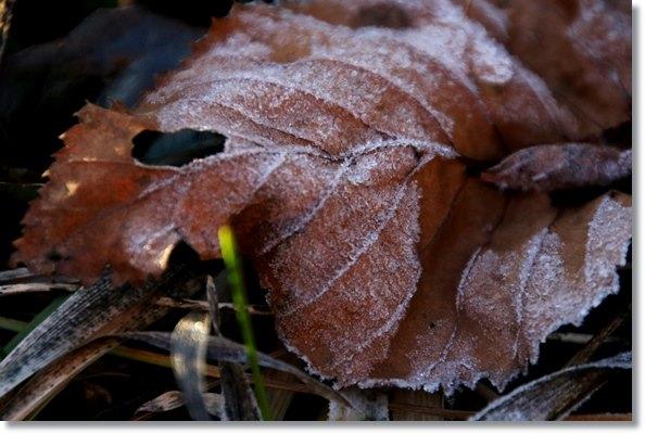 栂池自然園-11 霜-5 15.10.3