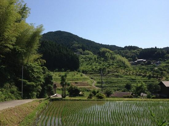 1水田風景5503.jpg
