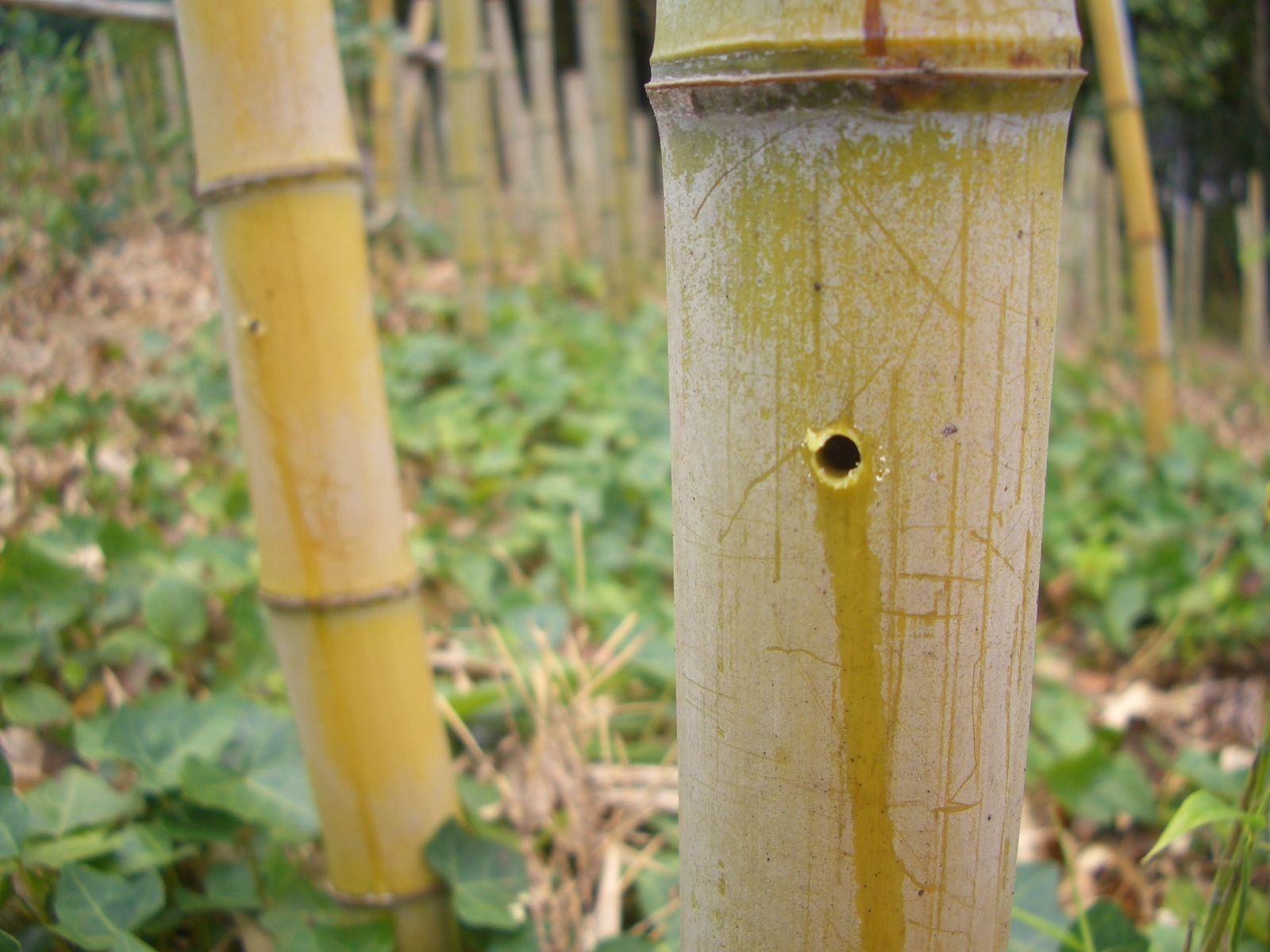 剤 枯らす 除草 竹 を