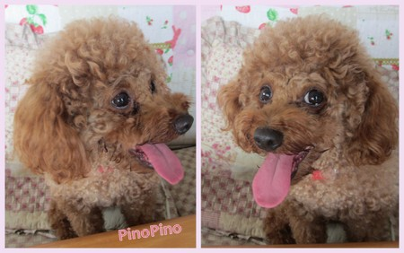 PinoPino2013後期3.jpg