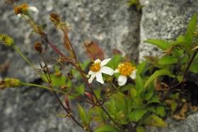 17白色花.JPG