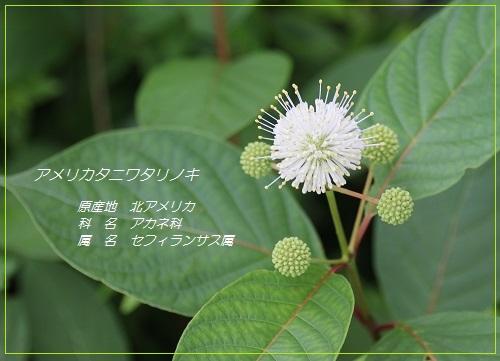2014_0616_171039-IMG_0207.JPG