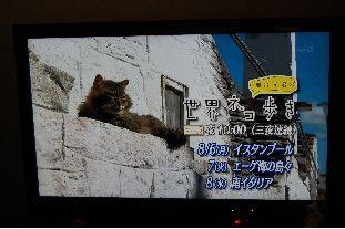 世界のネコ