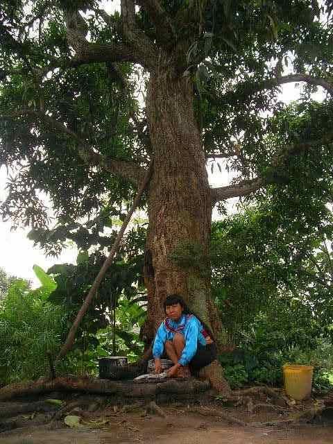 マンゴーの木の下で.jpg