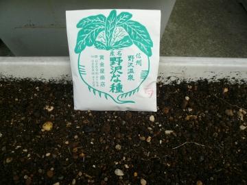 野沢菜の種