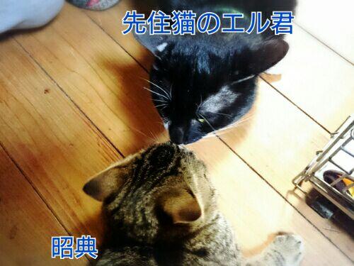 rblog-20160212061002-01.jpg