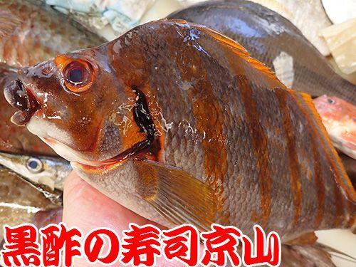 寿司 出前 江東区 豊洲