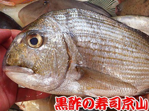 寿司 出前 文京区 千石