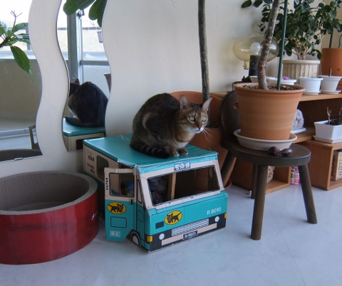 お猫様の おもちゃ箱