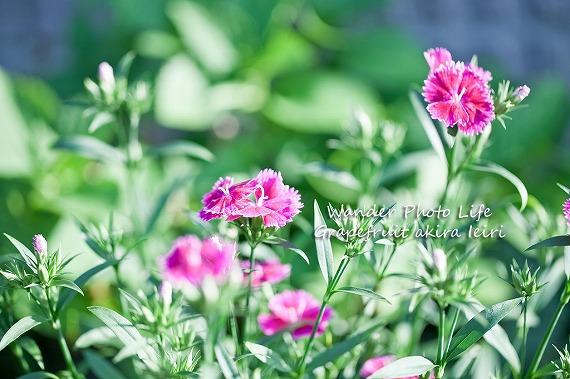 IMG_0858のコピー.jpg