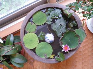 水鉢花.jpg