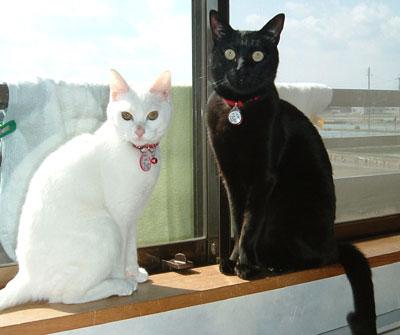 白猫&黒猫-タマホームで建てる家