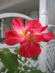 2008.6 053-1.jpg