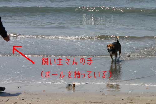 02_dog_sea1.jpg