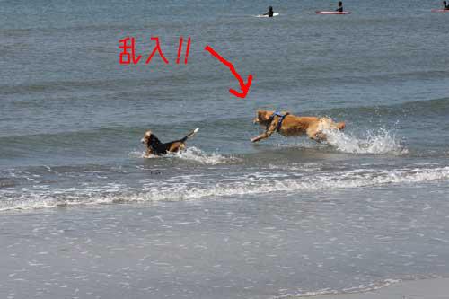 02_dog_sea2.jpg