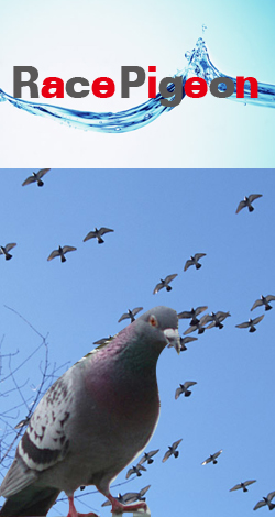 ブログ レース 鳩