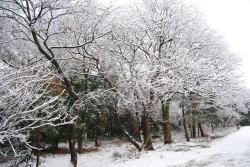 雪裏山.jpg