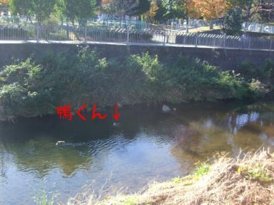 イタチ川散歩3
