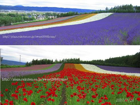 富良野2007