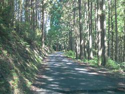 杉の森の中.jpg