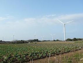 キャベツ畑の風車.JPG