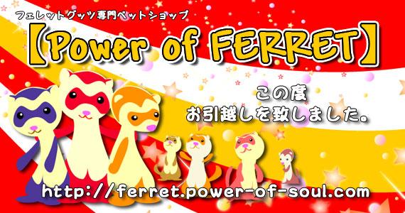 フェレットグッツ専門ペットショップ【Power of FERRET】