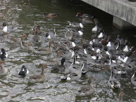 昆陽池公園・水鳥パラダイス.JPG