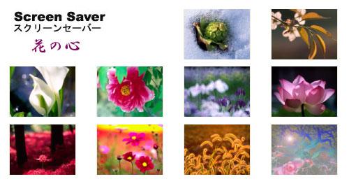 スクリーンセーバー ・花の心