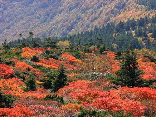 紅葉の蔵王・刈田岳