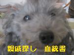 shinsekisagasi.jpg