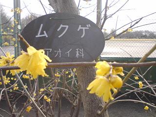 kenkou3.jpg