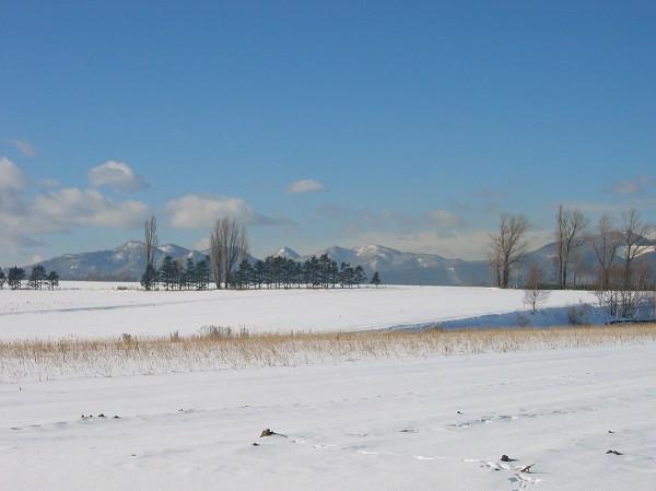初冬景色1