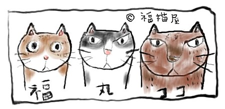 福猫チーム
