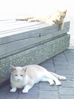 33 臨港パークのネコ.JPG