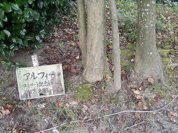 50 植樹の足元.JPG
