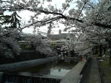 夙川公園 JR線と桜1.JPG