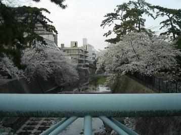 夙川公園01.JPG