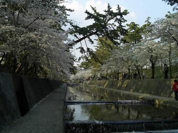 夙川公園11.JPG