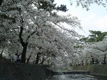 夙川公園13.JPG