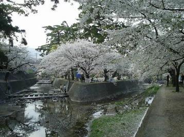 夙川公園 苦楽園付近04.JPG