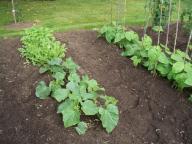 veg garden 1 dim