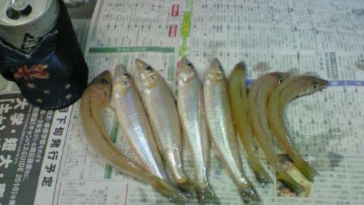 三角港釣り第11弾09052403