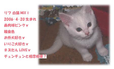 愛猫リフの簡単紹介♪