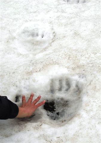 クマの足跡.JPG