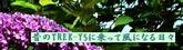 昔のTREK-Y5ロゴ01.jpg