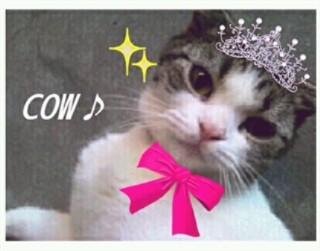 _cowqueen2.jpg