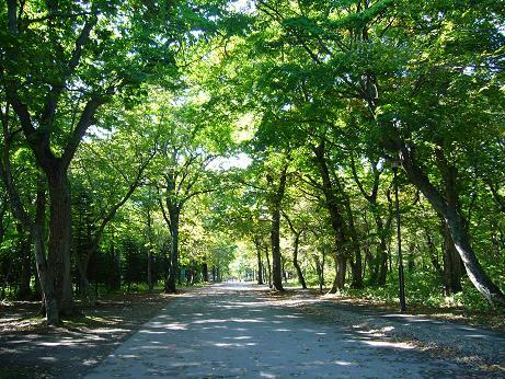 青葉公園 木々の小道.jpg