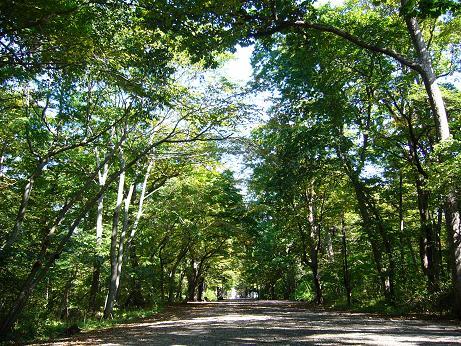 青葉公園 木々の小道 まだまだ行く・・.jpg