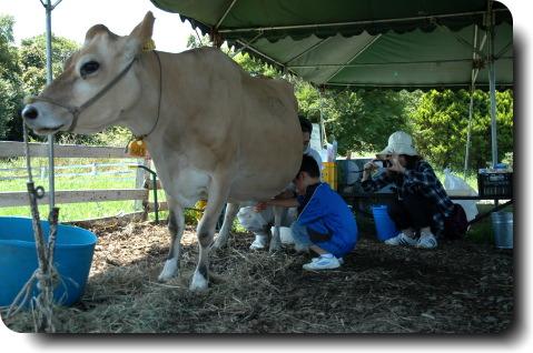 清里で酪農体験